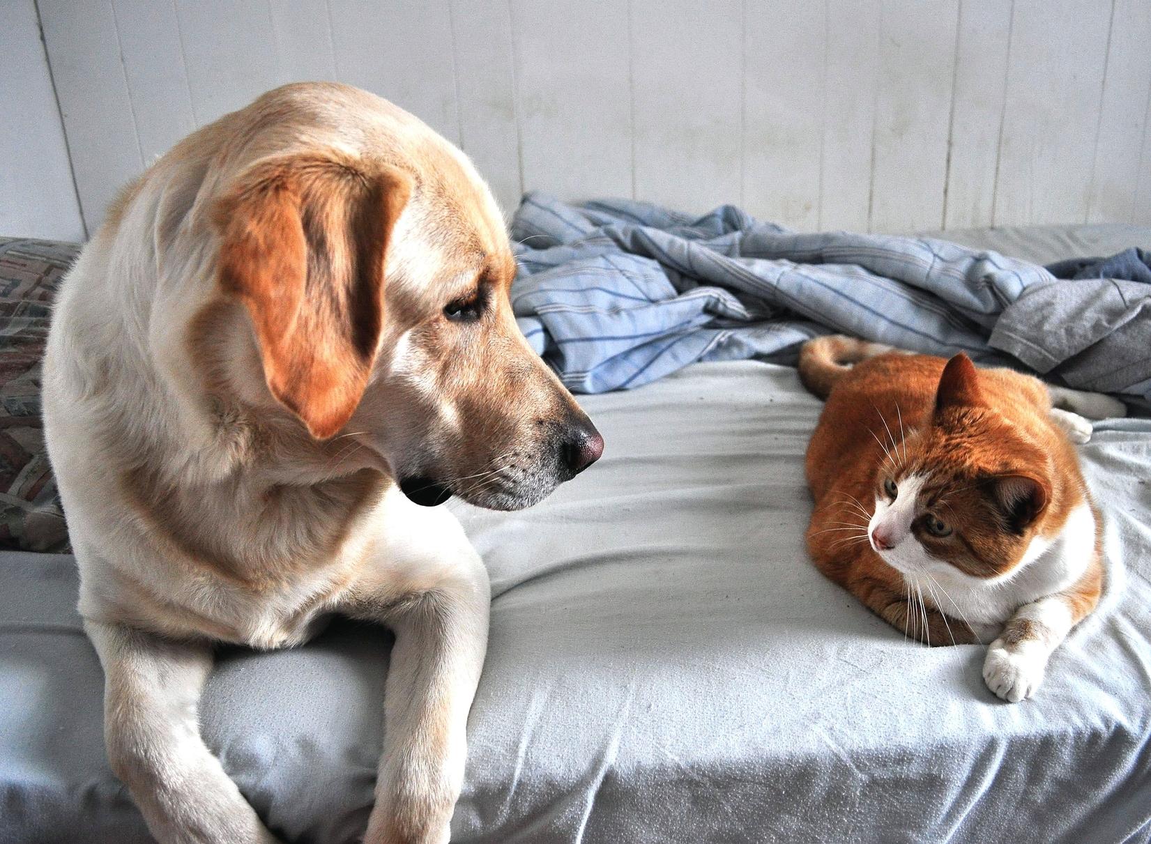 "Alarmas ""a pruebas de mascotas"""